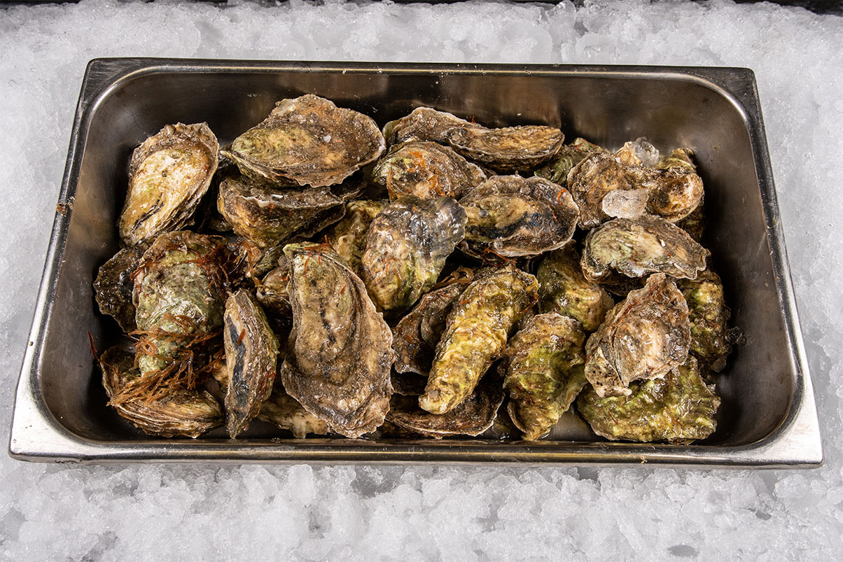 Oysters-2